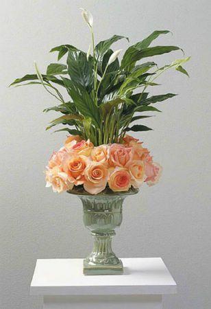 Plants-1 Funeral Plants