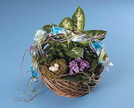 Plants-11 Funeral Plants