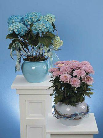 Plants-12 Funeral Plants