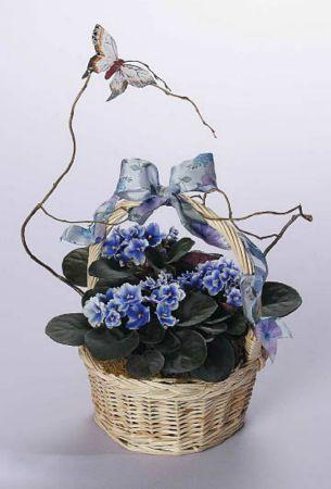 Plants-13 Funeral Plants