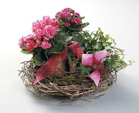 Plants-14 Funeral Plants