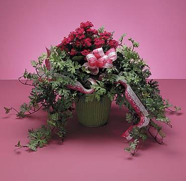 Plants-15 Funeral Plants