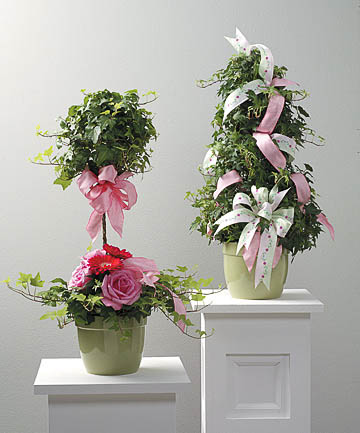 Plants-16 Funeral Plants