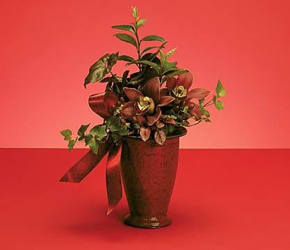 Plants-17 Funeral Plants