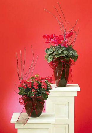 Plants-18 Funeral Plants