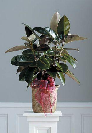 Plants-19 Funeral Plants