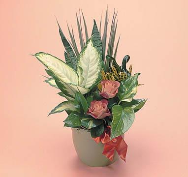 Plants-3 Funeral Plants