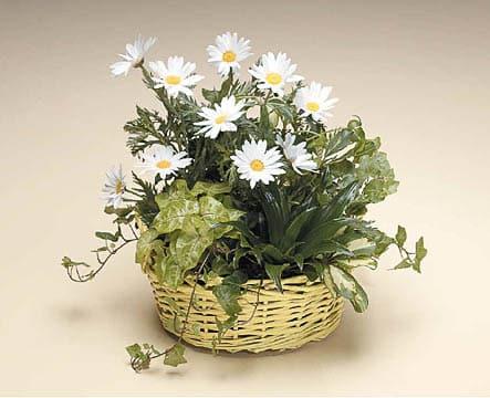 Plants-4 Funeral Plants