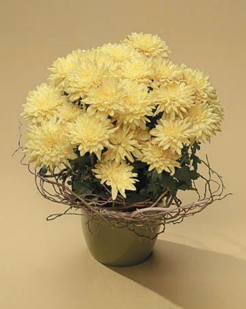 Plants-5 Funeral Plants