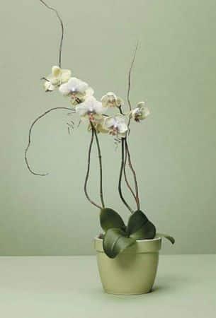 Plants-7 Funeral Plants