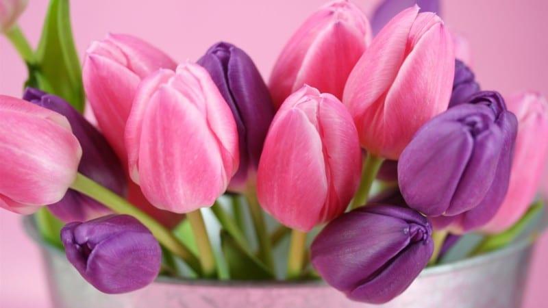 tulip-800x450 Home