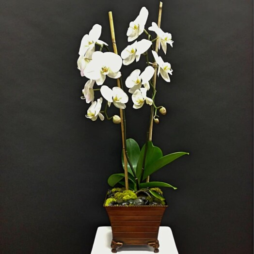 orchids arranged in a wood planter