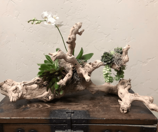 orchids and driftwood