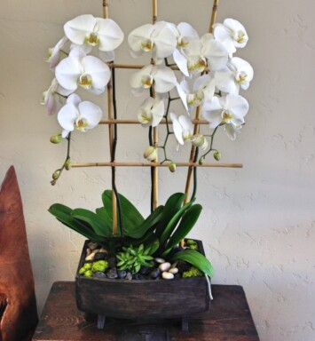 orchids in a planter