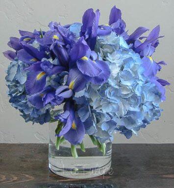 blue iris in a vase