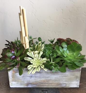 succulents in a wood box planter
