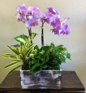 two orchids and plants in a planter