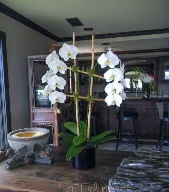 grand white orchids