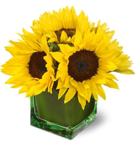 6 sunflowers in a vase