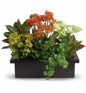 Goldfinger crotons, bright yellow and orange kalanchoes