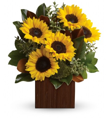 sunflower explosion in a square vase