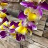 Bombay Orchid & Plumeria Hawaiian Lei