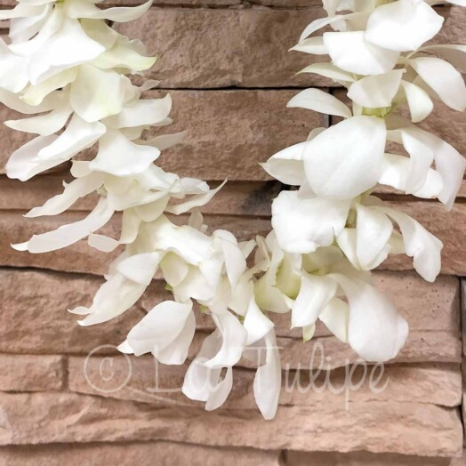 Double White Dendrobium Orchid Hawaiian Lei